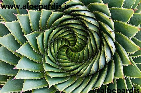 گیاه شناسی