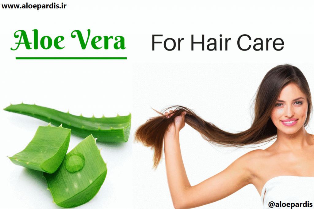 How-to-Use-Aloe-Vera-for-Hair-Care_1